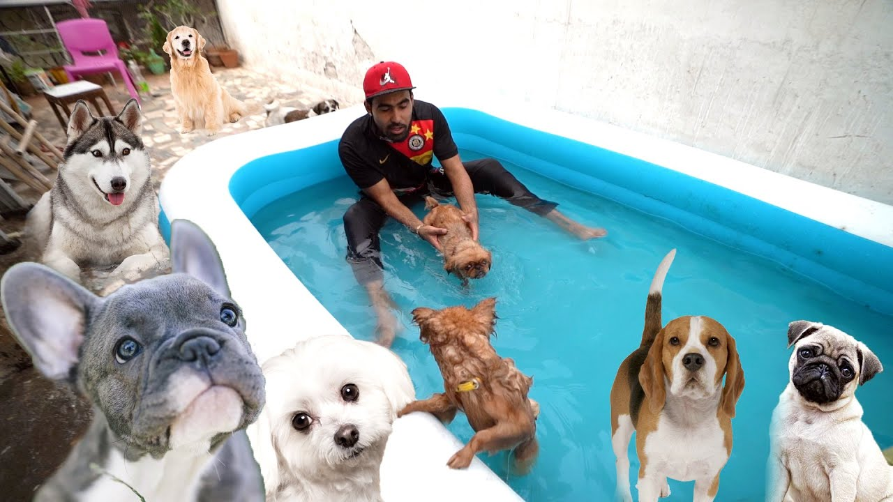 Swimming tourmanent Of Dogs - 1 time In India