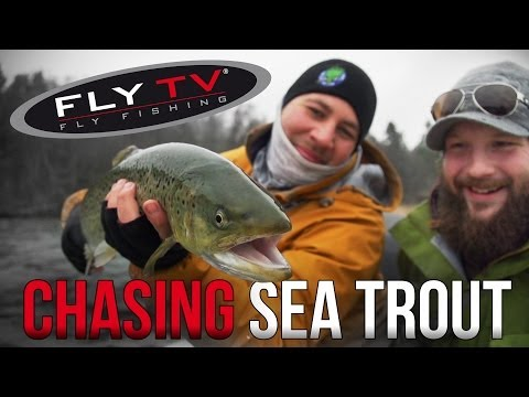 FLY TV - Chasing Sea Trout