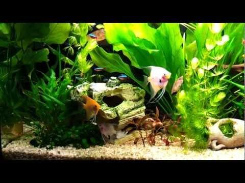 Allestire un acquario d 39 acqua dolce per pesci tropicali for Acquario 120 litri