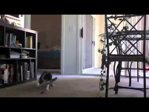 High Strung Cat Hates Guitar Soundtrack - Funny Videos at Videobash.mp4