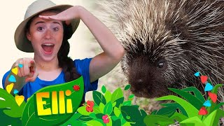 Elli Explorer | Learn all about Porcupines with Elli Explorer | Learn Colors Kids TV shows WildBrain