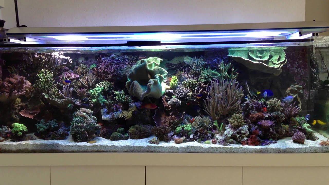 Aquarium Beleuchtung T5 | Aquariumbeleuchtung Hqi T5 Youtube