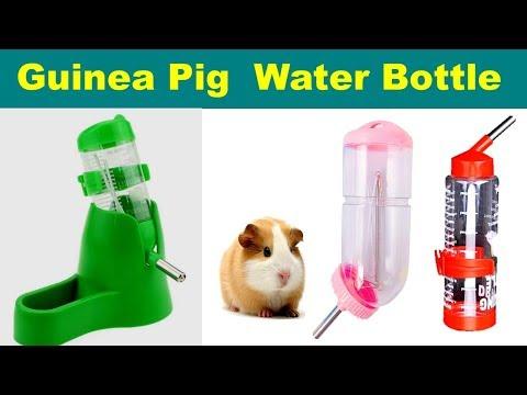 Best Water Bottle For Guinea Pig / Top Guinea Pig Water Bottles ||