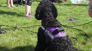 A local non-profit is training service dogs to help veterans and people with disabilities.