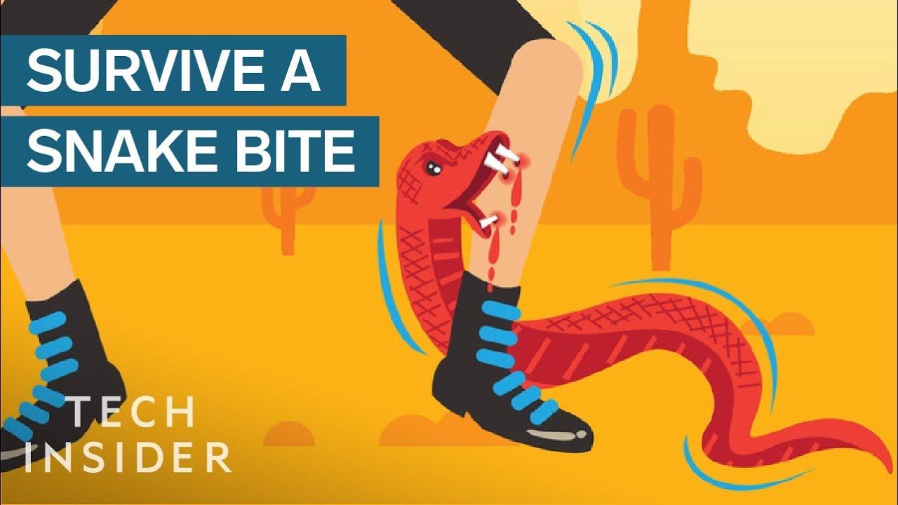 Што да правите ако ве нападне и гризне змија?