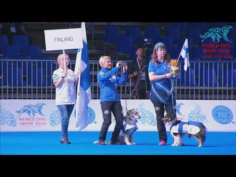 World Dog Show 2016 (день 2)
