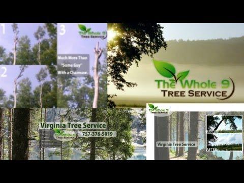tree-services-helping-virginia-beach-+-chesapeake-residents