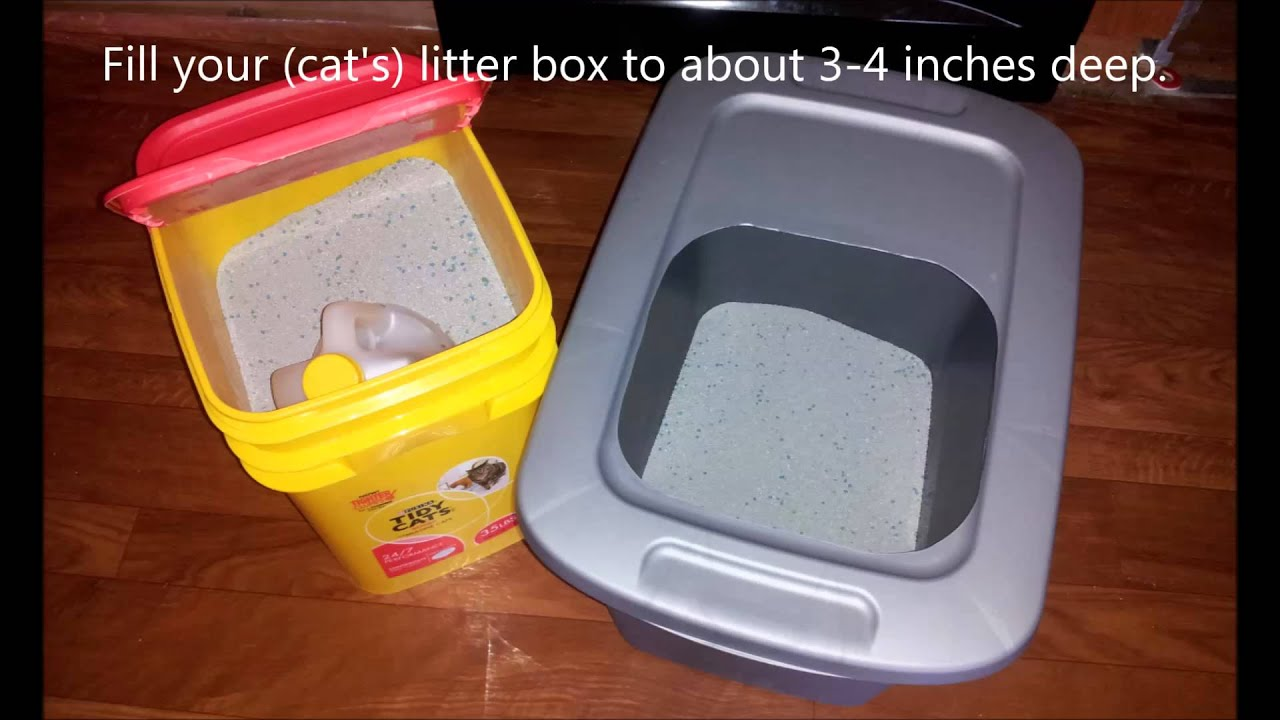 DIY Top Entry Cat Litter Box For Under 5 Dollars  YouTube
