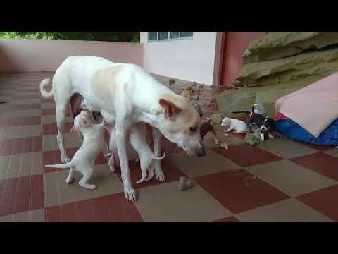 Street Dog Feeds Her Cute puppies - Must watch Dog`s Motherhood video