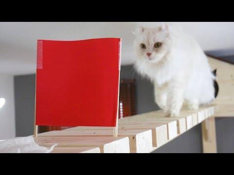 猫は赤色が見えないらしい。