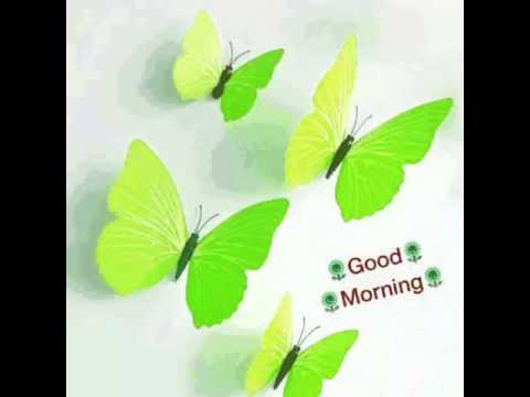 Good Morning Butterfly Youtube