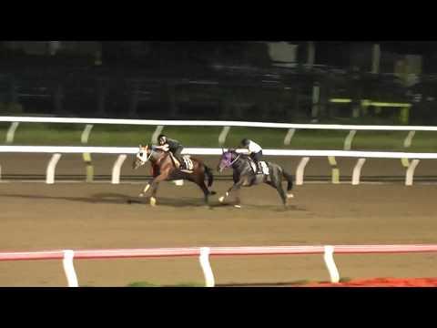 佐野厩舎 ノーブルヘラクレス号 調教映像 2018.9.23