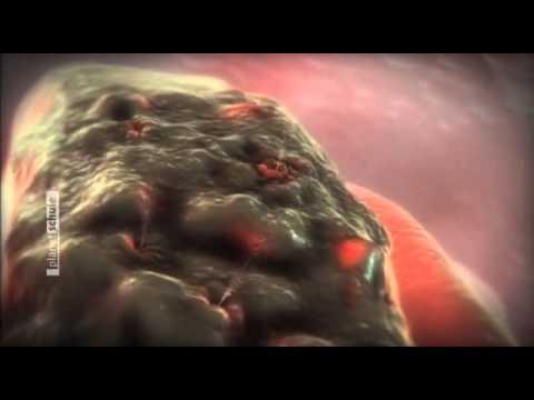 Der Kern des Lebens - Zellen und Viren