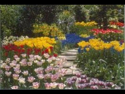 plantes à bulbes : tulipes, glaïeuls, narcisses, iris, cyclamens
