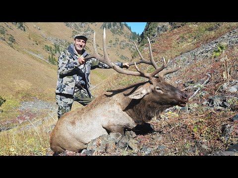 Maral (Wapiti) Hunting In Kazakhstan With ProfiHunt