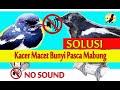 Mengatasi Burung Kacer Macet Bunyi Setelah Mabung  Mp3 - Mp4 Download