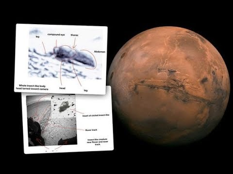 Photos show 'insects' on Mars, claims scientist