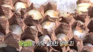 생생정보 2017.09.22 노봉방