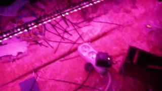 Светодиодная лента многоцветная RGB.Обзор в темноте.Ко