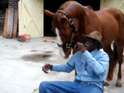 TIGER THE TALKING HORSE PT2