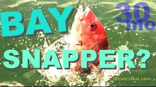 FISHING RED SNAPPER IN THE BAY Corpus Christi Texas - Native Kayaks