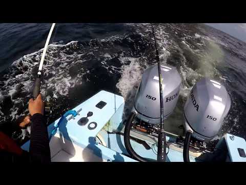 CATCHING BLACK FIN TUNA - OFFSHORE FISHING  - Trinidad, Caribbean