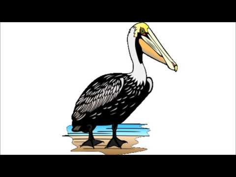 Pelican - Storybook Moment