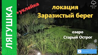 Русская рыбалка 4 - озеро Старый Острог - Лягушка и уклейка на линевой точке