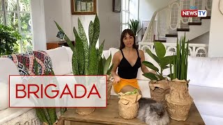 Brigada: Plant collection ni Aubrey Miles, silipin!