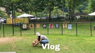 vlog| 강아지와 떠나는 여름휴가, 다이슨 드라이기 …