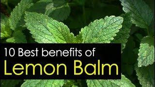 10 Amazing Lemon Balm Benefits, Uses and Medicinal Value