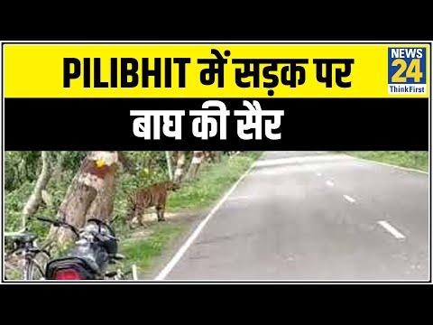 UP के Pilibhit में सड़क पर बाघ की सैर || News24