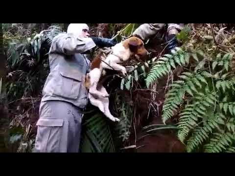 Bombeiros resgatam cadela que ficou presa por 10 dias no alto de uma pedra