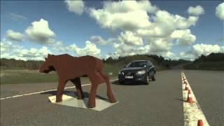 Volvo - system wykrywania zwierząt na drodze