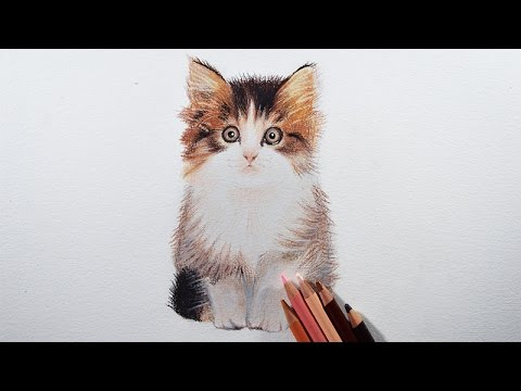 How to draw a kitten easily with colored pencils.