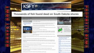 a 3rd fish kill in days plague us south dakota 10s of 1 000s july 6 2012 prediction