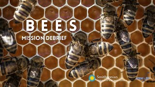 Bees and Aviation: STEM in 30 Mission Debrief