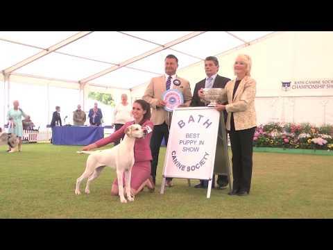 Bath 2017 - Best Puppy in Show