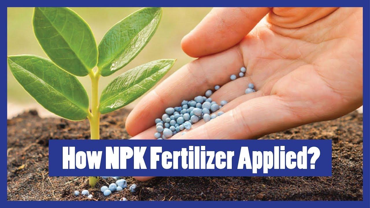 How To Apply Npk Fertilizer To Plants 2016 Urduhindienglish
