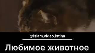 Голос Имана- Любимое животное Пророка Мухаммада ( мир ему и благословение АЛЛАГЬА ).......