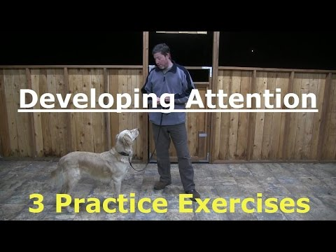 Teach your Dog to Pay Attention to You