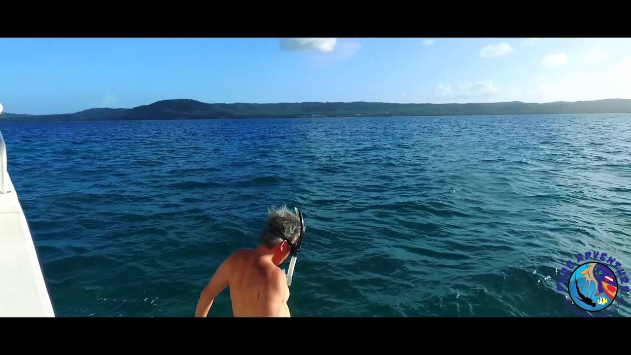 Snorkeling Vieques Tour Puerto Rico Youtube