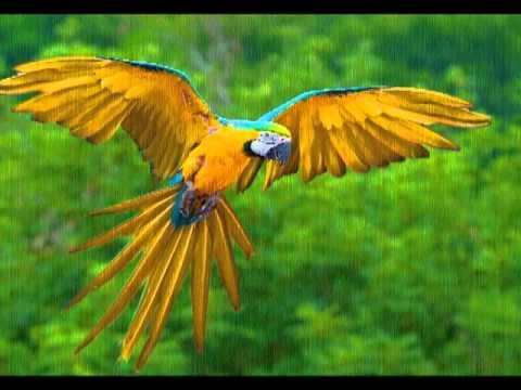 Exotic Animal Wallpaper Aves Ex 243 Ticas Exotic Birds Youtube