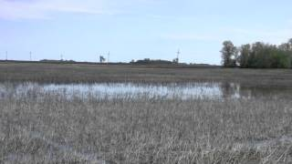 A Rancher's Voice for Wetlands