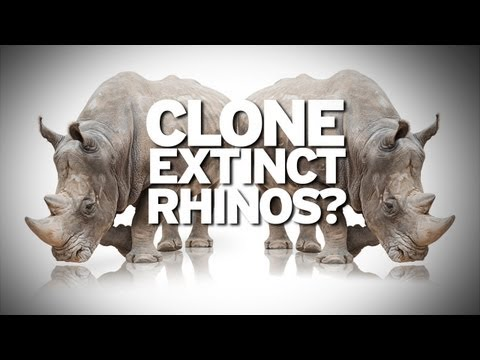 Cloning Extinct Rhinos From One Drop of Blood