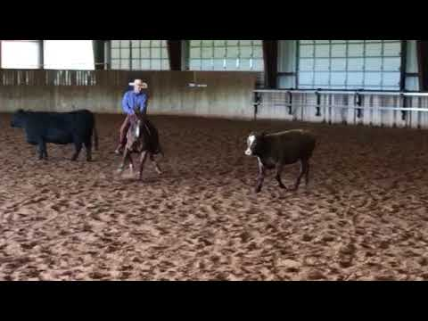 Sine Ranch Cutting Horses