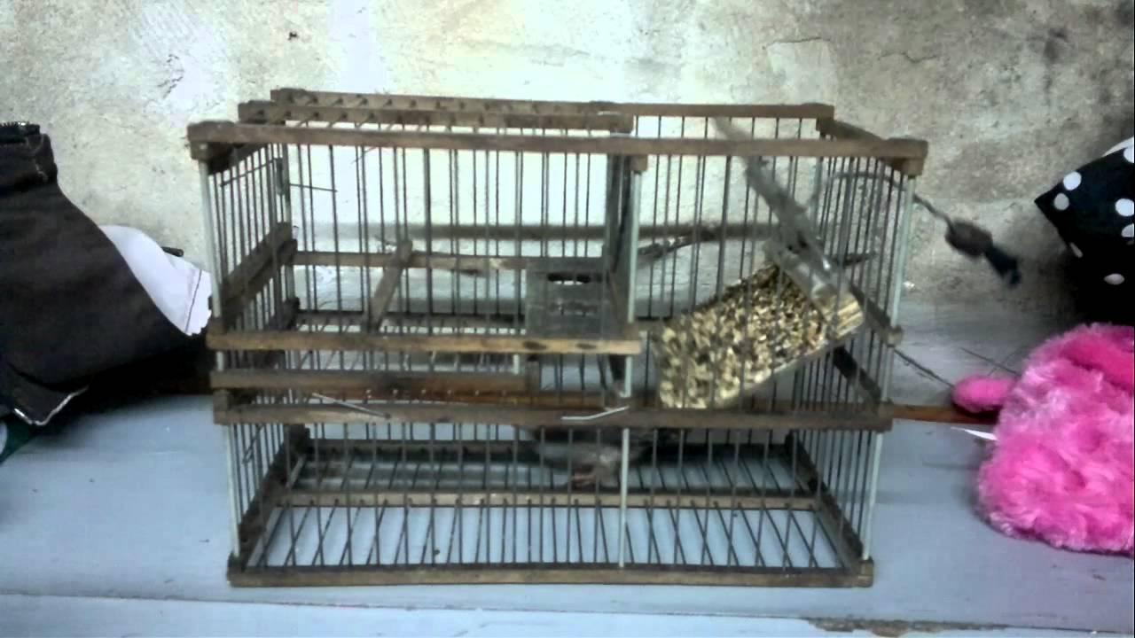 Trampa balancin para aves chicas tipo jilguero efercy funcionamiento youtube - Trampas para ratones de campo ...