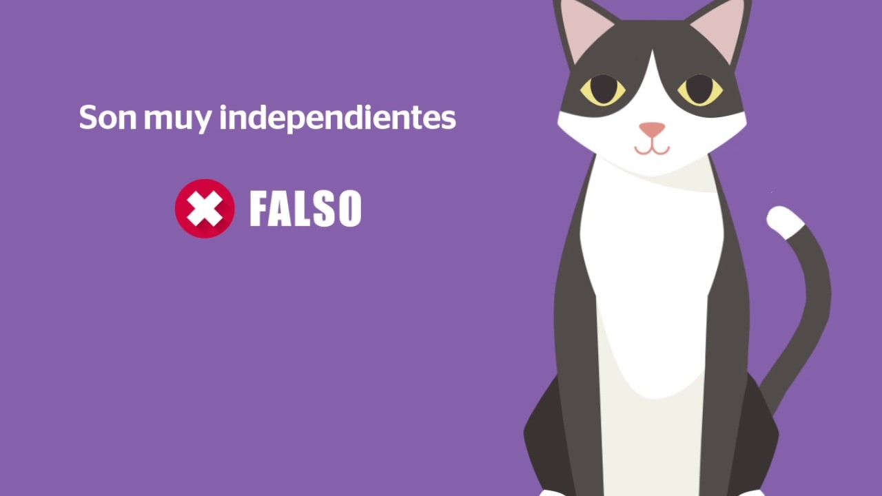 +KOTA: ¿Cierto o falso? Mitos de los gatos