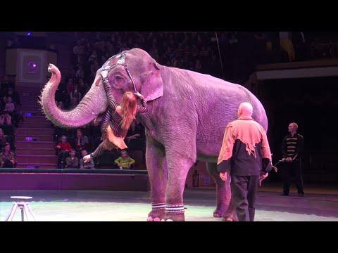 Video for kids. Цирк Академия клоунов. Полная версия. Видео для детей, клоуны