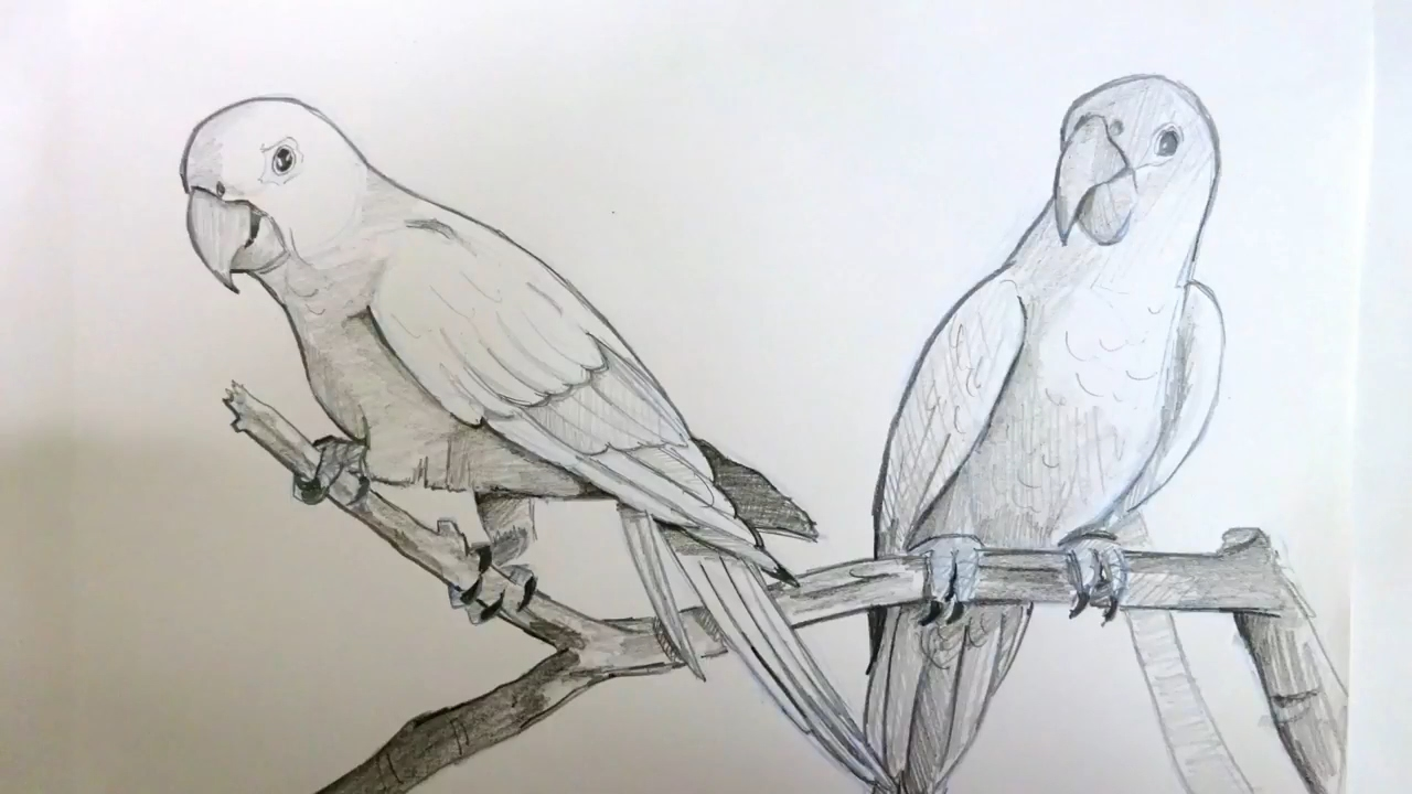 Drawing two parrots sitting on a branch pencil art timelapse